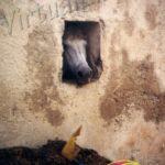 Pomonte cavallo nella stalla (antica foto)