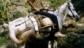 Pomonte vigneti e cavallo