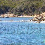 Spiaggia del Porticciolo Procchio