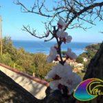 Veduta sulla baia di Naregho dal Residence